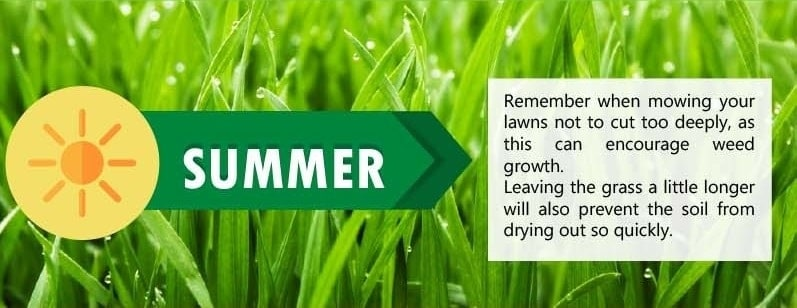 Lawn Care Tips for Summer Season
