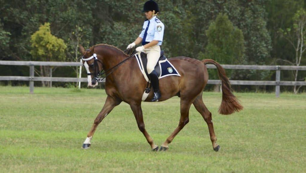 Camden Bicentennial Equestrian Park