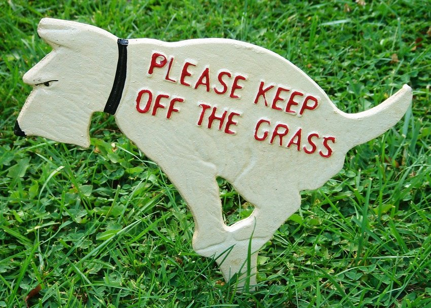 Dog poop can also have a detrimental effect on your lawn