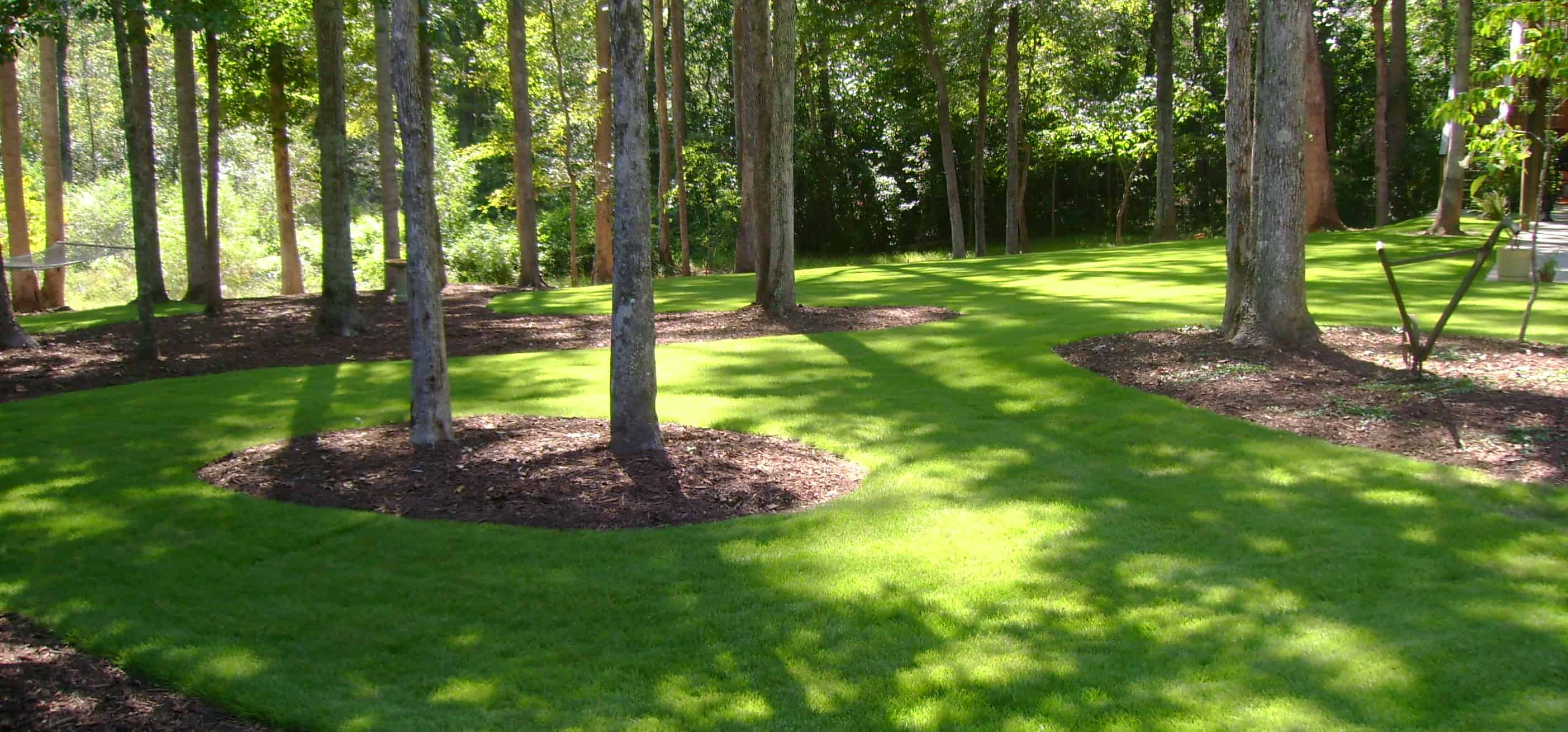 Best Grass Types for Shade