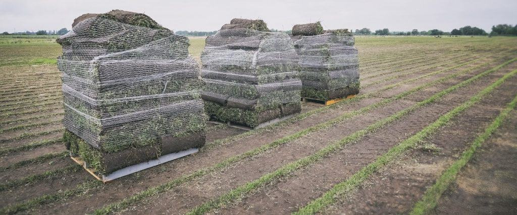 Turf cut and loaded onto pallets ready for delivery to Bankstown