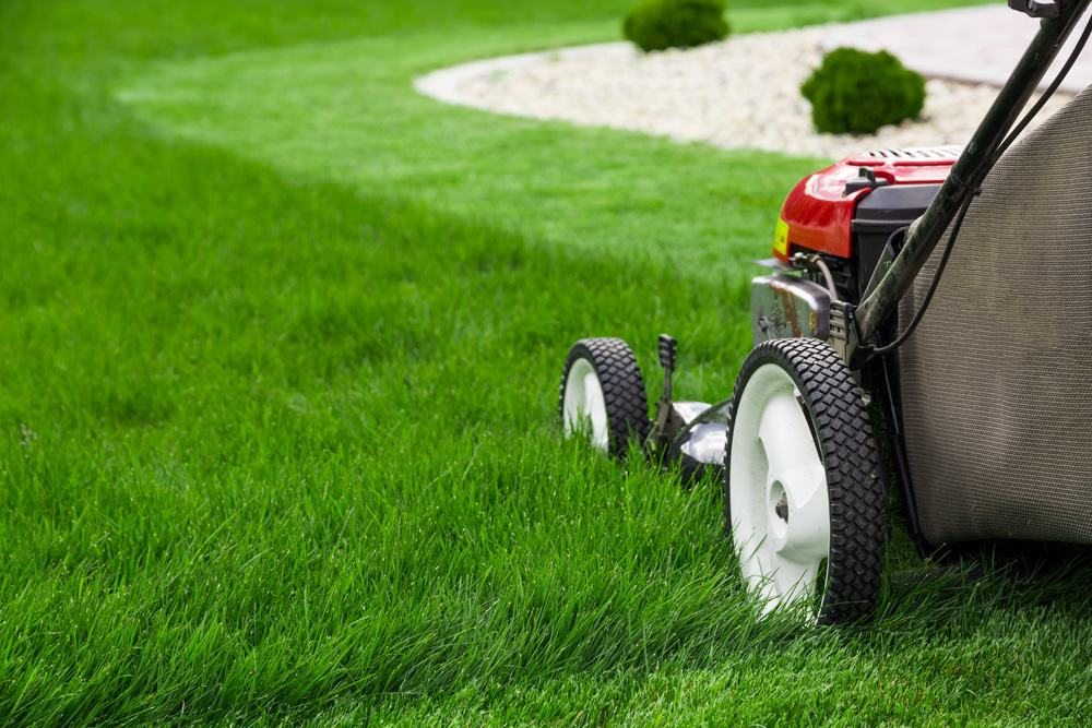 Regular mowing will help keep your lawn looking its best