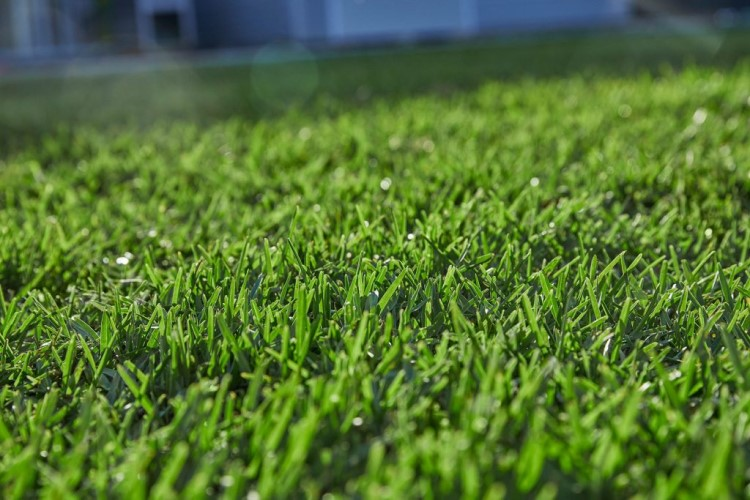 Guide on shade tolerant grass varieties that can thrive in mixed sun and shade
